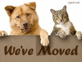 we_dogcatmoved