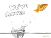 we_moved_goldfish
